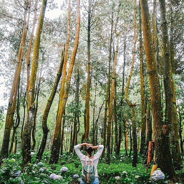 20 Tempat Instagramable Di Malang Yang Wajib Diburu Bababeli